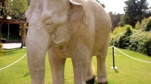 elefante-blanco