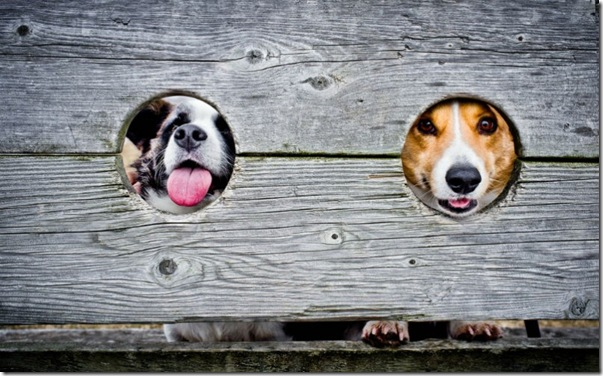 fotos-que-no-haciamos-sin-smartphones-perros-huecos-800x498