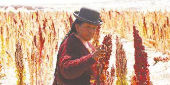 Exportación de quinua de Perú casi duplica a la de Bolivia