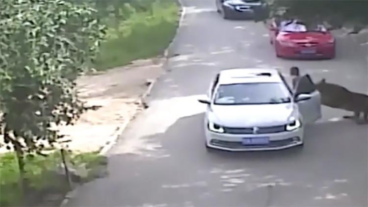 Un tigre mata a una mujer en China en un brutal ataque