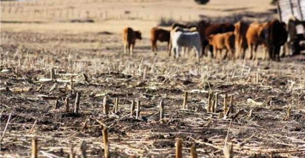 Los productores reportan millonarias pérdidas por la falta de agua