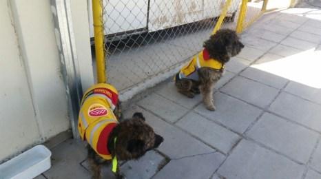 Rastas y Tulipán con sus uniformes ediles en las oficinas del La Paz Bus en el PUC