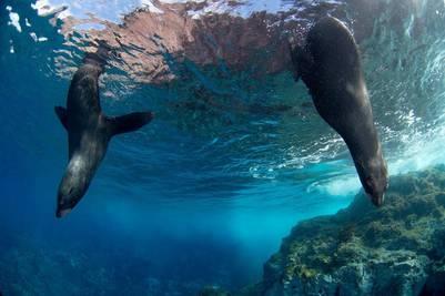 El nuevo parque marino tendrá más de 300.000 km2.