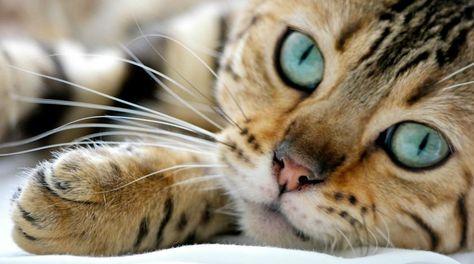 Las autoridades afirman que deben aplicarse medidas para que los felinos no transmitan enfermedades y para que no rompan el equilibrio ecológico