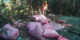 Mujer muere en operativo antidrogas en San Germán