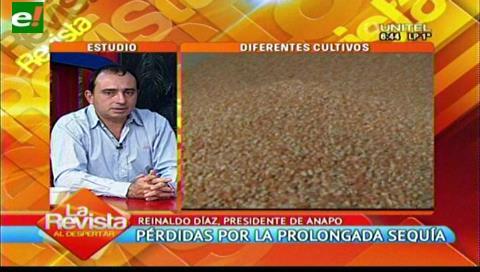 Sequía e importacion de maíz afecta a productores