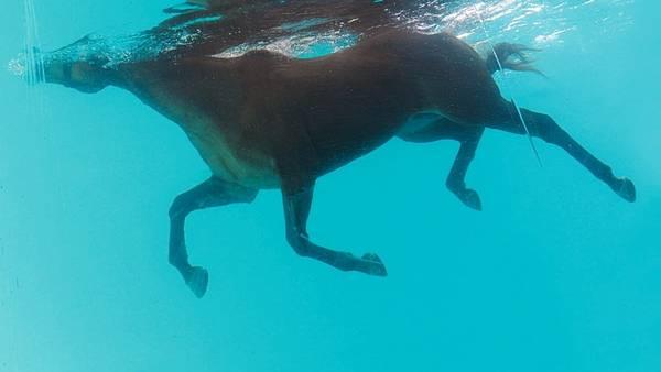 Entrenamiento. Los caballos de polo hacen pretemporada en caminadoras acuáticas.