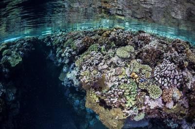 Corales en Melanesia (Getty Images).