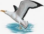 """Etude d'un poème """"L'albatros"""""""