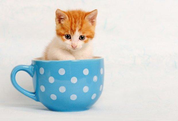 [Imagen: gato.jpg?resize=620%2C420]