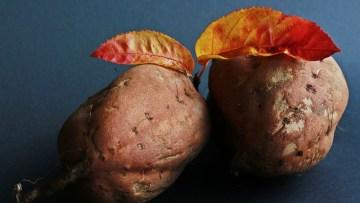 patate dolci cane
