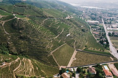The terraced vineyards of Cote-Rotie