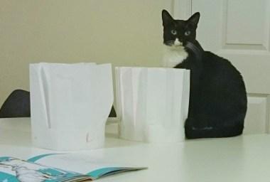 Kisu the cat appreciates Chefs and their hats