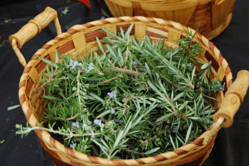 fresh-rosemary-in-basket