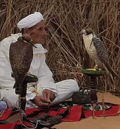 Ces Chorfas Lekouassems qui maîtrisent le langage des faucons.