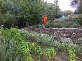 Sardinia Su Gologone veg garden_201016