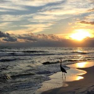 Destin-Bird-at-Sunset