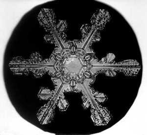 Bentley_Snowflake17
