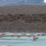 Laguna Brava – Expedición al interior de la cordillera