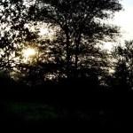 Fotos Parque Kruger Sudáfrica, amanecer