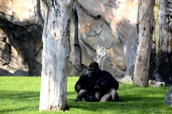 Bioparc valencia visita al parque de animales el pachinko - Telefono bioparc valencia ...