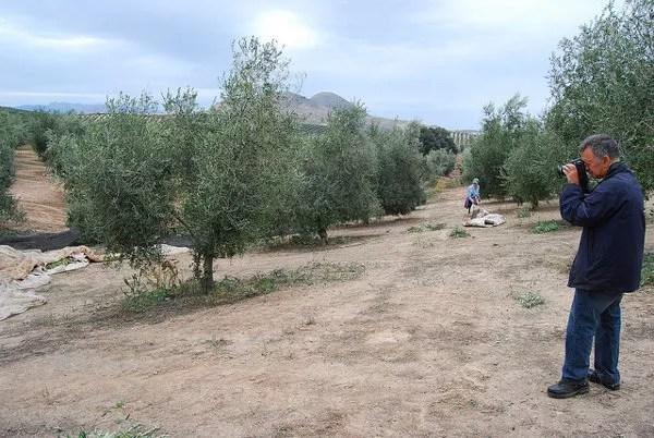 Paco Elvira fotografiando los olivos en la provincia de Jaén