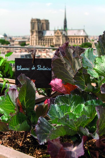 Jardín vegetal en la terraza de Terroir Parisien.