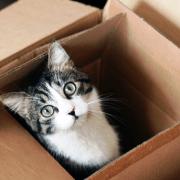 gato mudanza