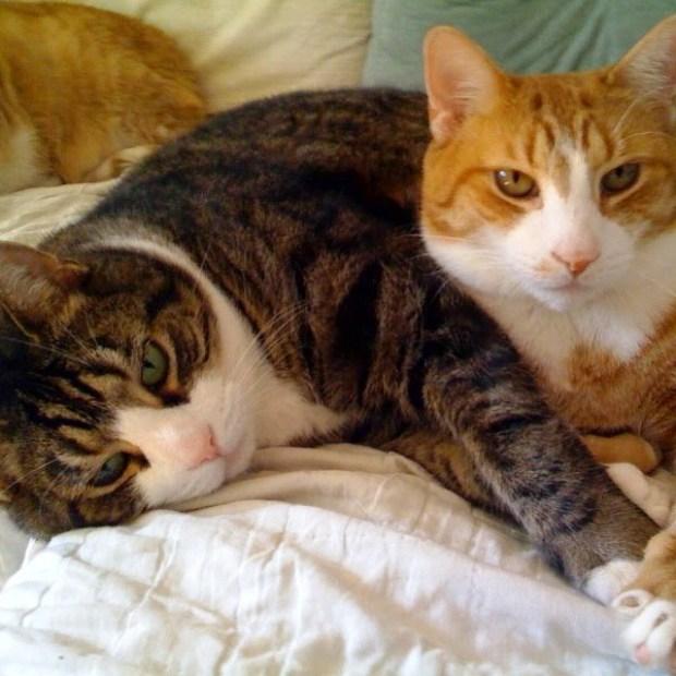 Feliway espa a cuando hay m s de un gato en casa - Fundas para unas de gato ...