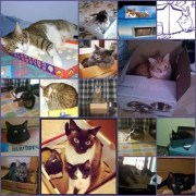 Collage Gatitos Cajas