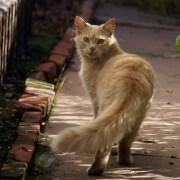 Feliway - Entorno optimo para gatos