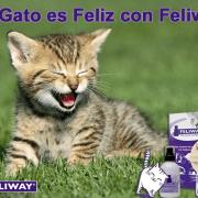 Mi Gato es Feliz con Feliway