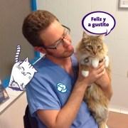 Feliway y las visitas al veterinario