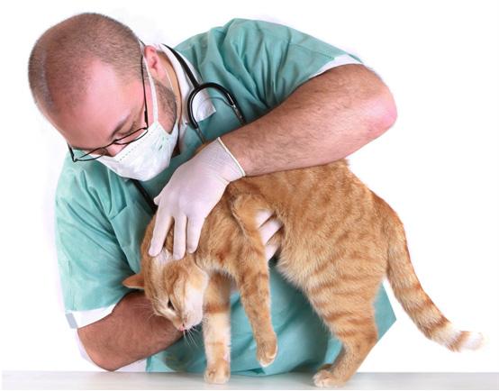 Visita veterinaria de gatos - Feliway