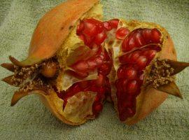 Sin apoyo gubernamental la industria de la granada en Jalisco