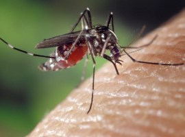 Registra Ciudad Guzmán 3 casos de chikungunya en 2015