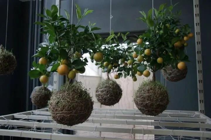 string-gardens-2