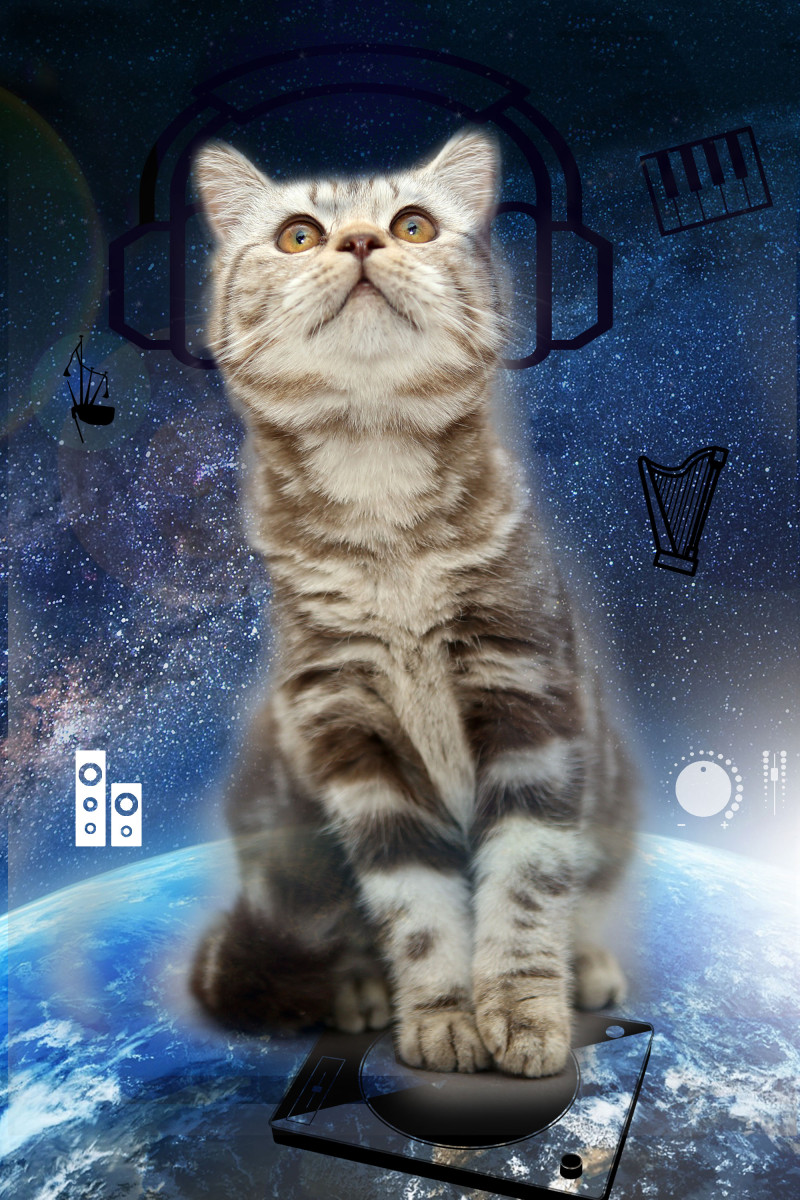 The-Space-Cat-1