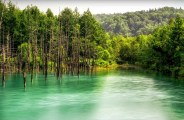 池-Pond