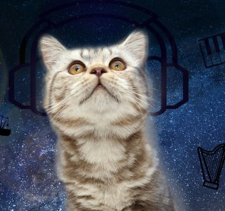The-Space-Cat-1-web