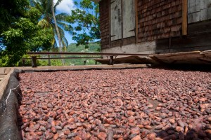 cocoa-drying