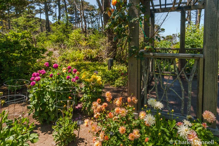 Access Upgrades Abound at Mendocino Coast Botanical Gardens