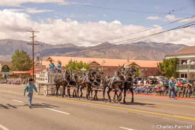 Mule Days Parade in Bishop, California