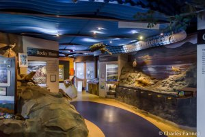 Exhibits in the Morro Bay Museum of Natural History