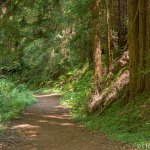 Fern Canyon trail at Russian Gulch State Park