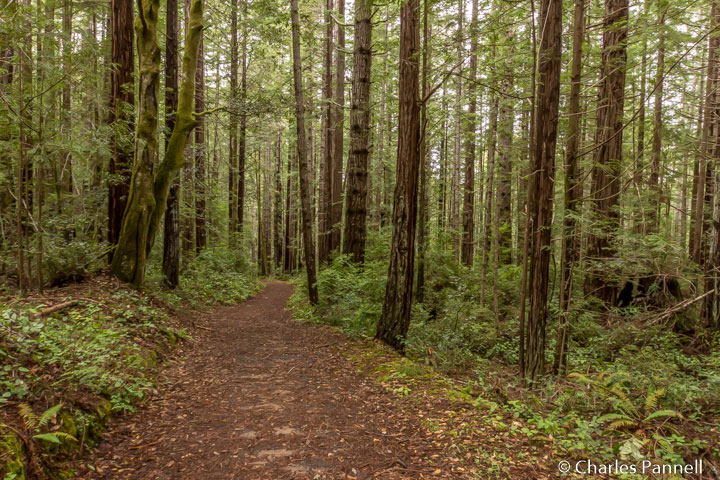 A Tale of Two Fern Canyons