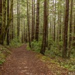 Fern Canyon Loop trail at Van Damme State Park