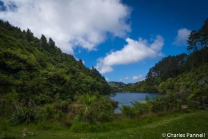 The reservoir at Zealandia