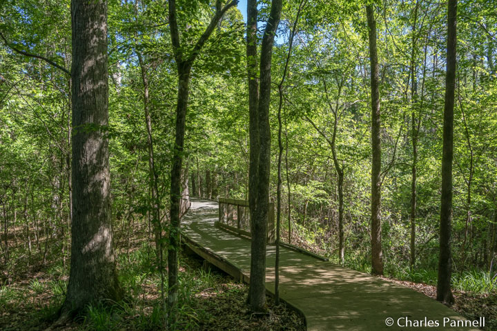 The Baldy Cypress Trail at the Louisiana State Arboretum