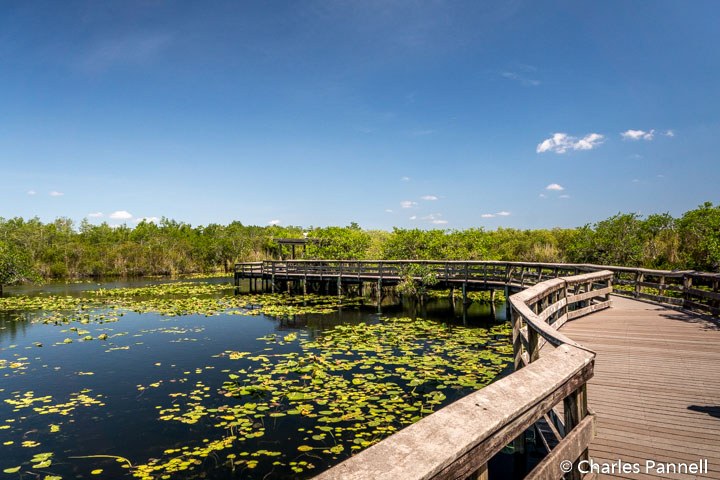 Anhinga Trail in Evergldes National Park